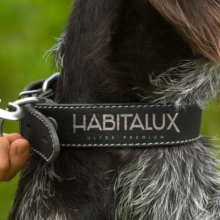Wizualizacja logo marki Habitalux widocznego na obroży dla psa